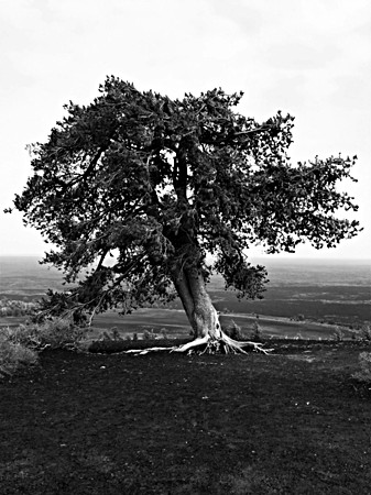 Lone Tree_Craters of the Moon