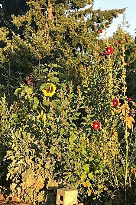 September Garden Chaos