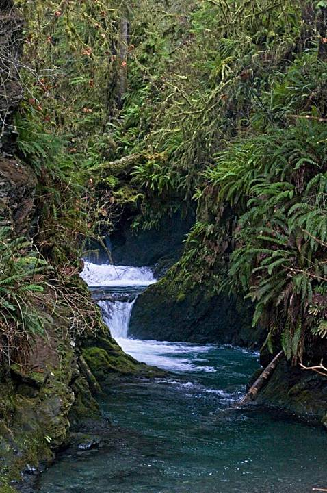Creek, Quinault Rainforest