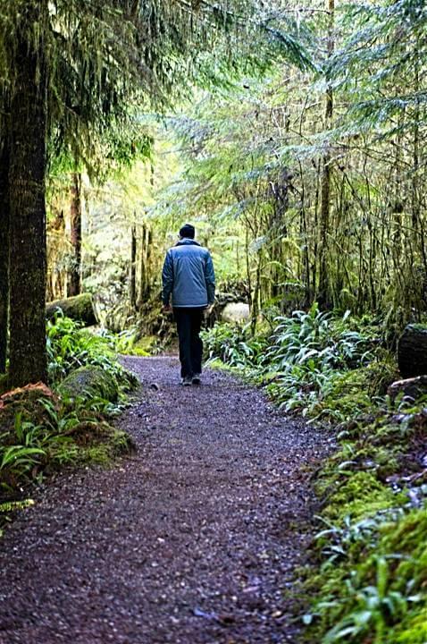Walking a path through the Quinault Rainforest
